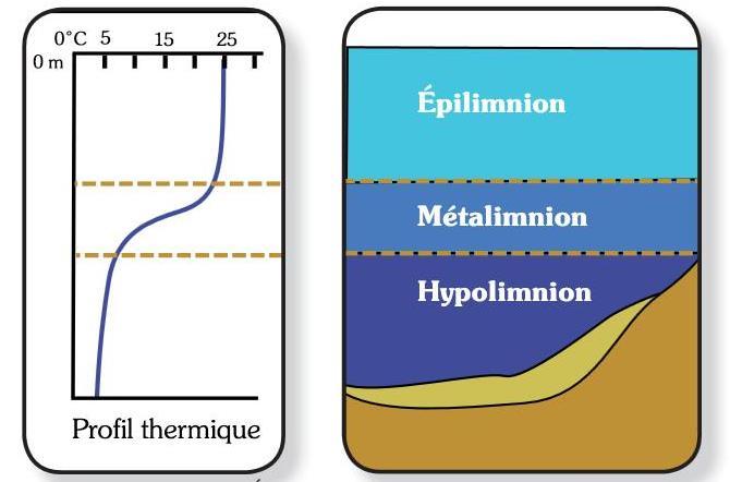 Stratification thermique estivale. Source : CRE Laurentides 2009